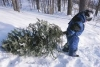 Lassen National Forest Christmas Tree Permits