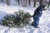 Christmas Tree Permits Available for Lassen National Forest 2017