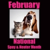 National Spay & Neuter Awareness Month 2016